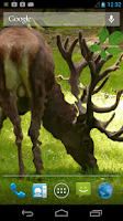 Screenshot of Deer Live Wallpaper