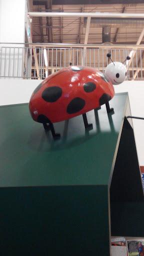 Creepy Ladybug