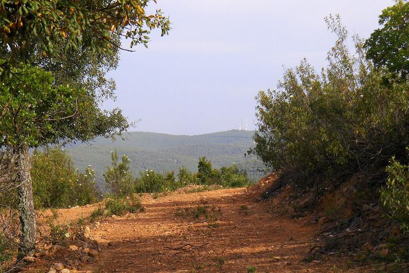 valle de los pedroches I