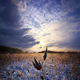 Holding On by Phil Koch - Landscapes Prairies, Meadows & Fields ( vertical, wisconsin, ray, fine art, milkweed, travel, phil koch, leaves, landscape, photography, sun, love, sky, tree, nature, autumn, path, bluesky, horizons, light, flower, clouds, orange, park, green, twilight, horizon, scenic, morning, shadows, wild flowers, field, red, dawn, blue, color, backlight, sunset, fall, outdoors, meadow, trees, beam, sunrise, landscapes, floral, hike, mist )