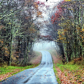 Take Me Home.... by Melanie Goins - Landscapes Forests ( west virginia, fog, colors, trees, road,  )