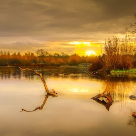 Drift wood by Roy Jotic - Landscapes Sunsets & Sunrises