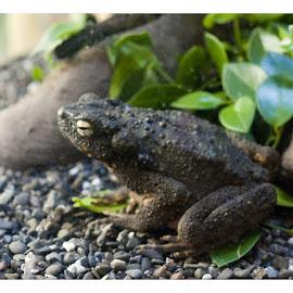 by Ife Ali - Animals Amphibians