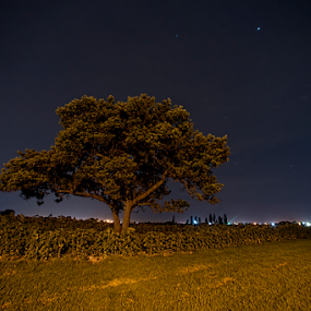 Lonely tree at Midnight by Cristobal Garciaferro Rubio - Landscapes Travel ( field, trees, flowerfield, night, nightscape )