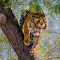 20150208 Phx Zoo613.jpg
