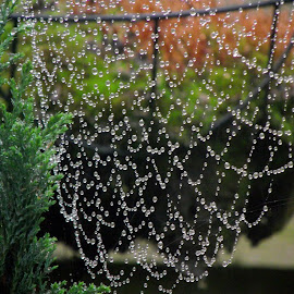 by Siân Oldfield - Nature Up Close Webs (  )