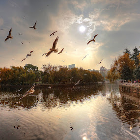 A Day of Peace by NC Wong - Landscapes Waterscapes ( winter, lake, birds )