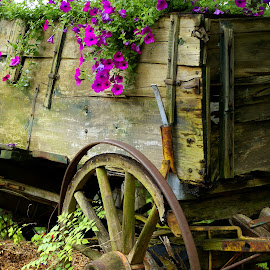 L. Wagon Front by Steve Parsons - Artistic Objects Still Life ( old, wood, still life, wheels, wagon, fine art, rustic, spokes, dilapidated, southwestern art, western, planter, buckboard, antique )