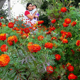 In Marigold garden at the terrace.. by Debmalya Lodh - People Maternity