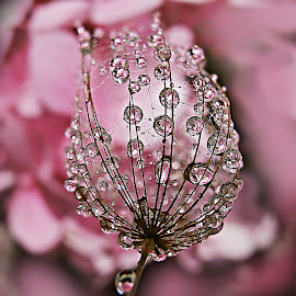 Prelude To Joy by Marija Jilek - Nature Up Close Natural Waterdrops ( plant, water, nature, herbs, joy, prelude, waterdrops )