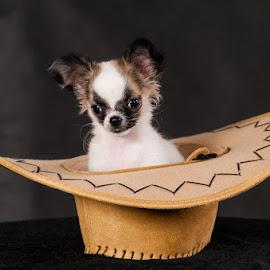 Little cowgirl by Martin Zenisek - Animals - Dogs Puppies ( cowboy hat, color, puppy, dog, portrait, hat,  )