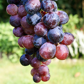 Grapes by Ad Spruijt - Nature Up Close Gardens & Produce ( grapes, grape )