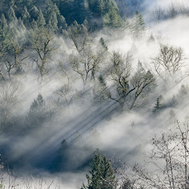 Foggy Morning by Jake Egbert - Landscapes Forests ( oregon, fog, 2015, jonsrud viewpoint, weather, sandy river, sunrise, sandy, landscape )