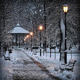 winter  by Danijela Isakov - City,  Street & Park  City Parks ( city parks, street & park, city )