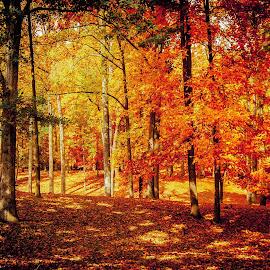 by Chris Martin - Landscapes Forests (  )