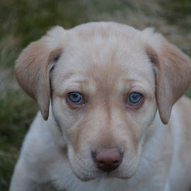 Remi by Eric Vance - Animals - Dogs Puppies
