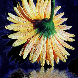 yellow gerber by LADOCKi Elvira - Digital Art Things ( nature, 2014, flowers, garden )