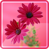Flower Backgrounds Wallpapers APK for iPhone
