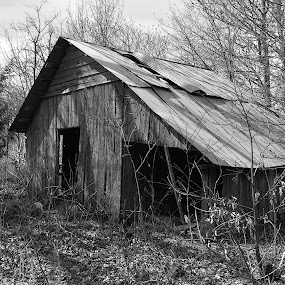 B&W Barn by Joel Mcafee - Buildings & Architecture Other Exteriors ( barn, black and white, rural, arkansas )