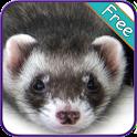 Ferret+ Free