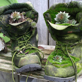 Mossy Boots by Gaye Charles - Nature Up Close Other plants ( succulent, green, moss, mossy, garden, boots )