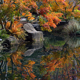 Autumn Reflections by Lisa Silva - Landscapes Waterscapes ( water, nature, autumn, reflections, landscape, pond, garden,  )