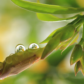 being touched by you by Lala Fuad - Nature Up Close Natural Waterdrops