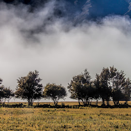 by Vibeke Friis - Landscapes Weather ( fog, trees, low cloud, rainbow road )