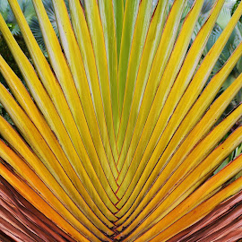 Pattern  by Koh Chip Whye - Nature Up Close Other plants (  )