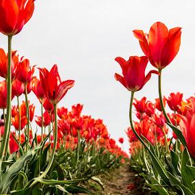 by Don Saddler - Flowers Flower Gardens