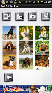 Dog Puzzles Pro - screenshot