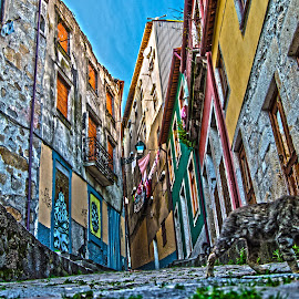 Street Cat Life by José Pedro Whiteman - City,  Street & Park  Street Scenes ( doors, old, houses, cat, window, hdr, street, windows, decaying, decay, pavement )