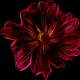 fractal flower by LADOCKi Elvira - Digital Art Things ( nature, color, flowers, garden )