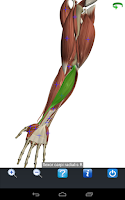Screenshot of Visual Anatomy Free