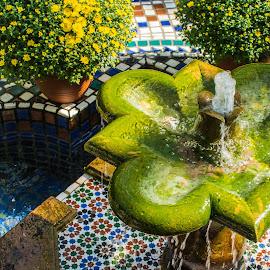 by Matt Meyers - City,  Street & Park  City Parks ( st louis, fountain, mums, flowers, garden, missouri botanical garden, biodome, temperate garden )