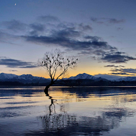 Lonely Tree by Winkie Chau - Landscapes Sunsets & Sunrises ( dawn, tree, shag, lake, sunrise,  )