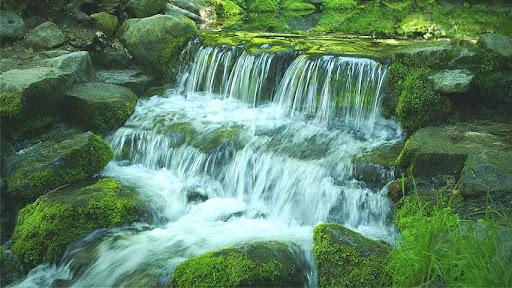 Green Stream HD Video Free