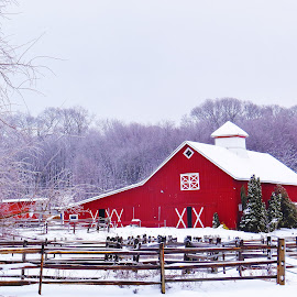 Winter Simple by Sergio Morales - Buildings & Architecture Other Exteriors ( white ranch, ranch, winter ranch, white winter, winter, barn, winter photography, farms, snow, barns, snow barns, photography )
