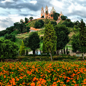 flowerfield and CHurch by Cristobal Garciaferro Rubio - Landscapes Prairies, Meadows & Fields