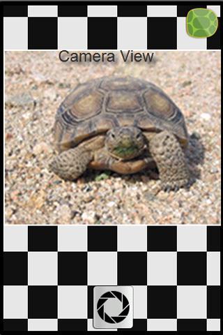 Mojave Desert Tortoise