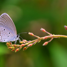 butterfly by Djerry Bansaleng - Animals Other