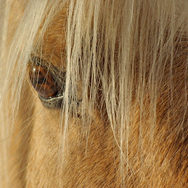 Sparkle by Giselle Pierce - Animals Horses ( horse, horse eye )