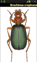 Screenshot of Coleoptera