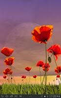 Screenshot of Poppy Field Live Wallpaper
