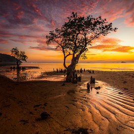 Nirwana Beachs at Dusk by Ade Noverzan - Landscapes Sunsets & Sunrises ( sunset, twilight, trees, beach, dusk )