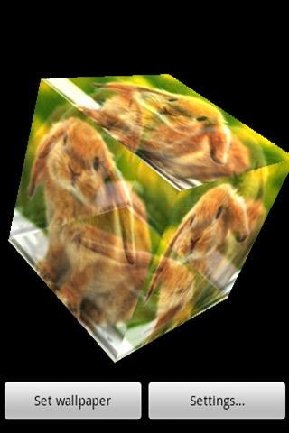 三維可愛的兔子1