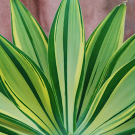Green Leaves by Lori Kulik - Nature Up Close Leaves & Grasses ( plant, desert, nature up close, leaf, leaves,  )