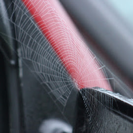 morning dew by Sue Connor - Nature Up Close Webs ( dew, spiderweb, web, morning dew, morning, spider web )