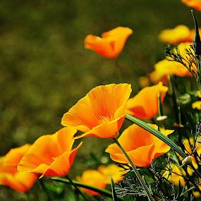 Garden by Saptarshi Datta - Flowers Flower Gardens ( yellow, garden, flower,  )