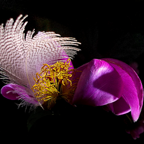 Marilyn Monroe's memories by Jurijs Ratanins - Instagram & Mobile Android ( mobilography, light, feather, flower, memory )